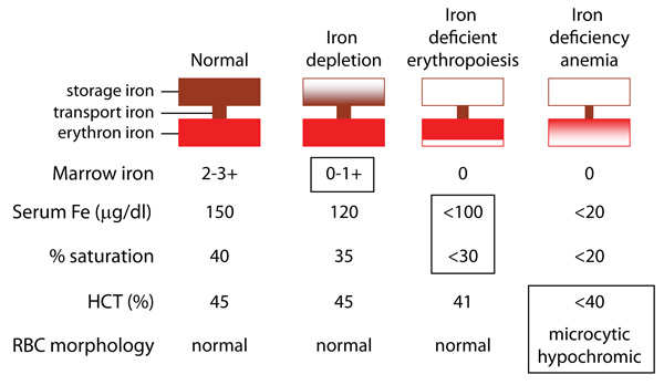 anemia without iron deficiency