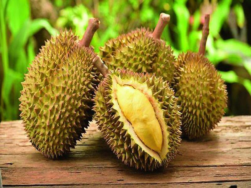 Guyabano fruit in bangalore dating