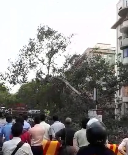 The tree was cut down in the evening when the activists were not present