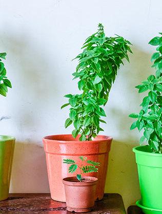 plantsWEB