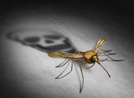 mosquito shutterstock_451293262