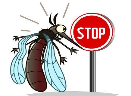 mosquito shutterstock_317816993