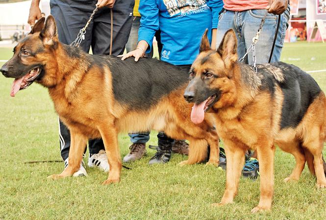 Dogs show their best moves  (BCCL/ Farhan Ahmad Siddiqui)