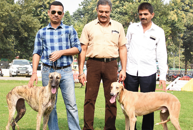 Dileep, Anurag, Johny with their Rampur Hounds – Stella and Hero (BCCL/ Farhan Ahmad Siddiqui)