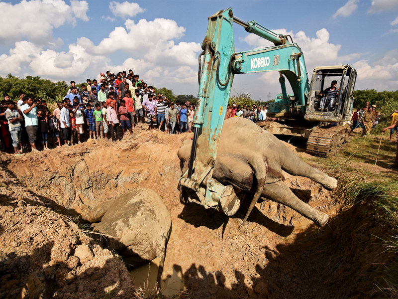 elephant death 1