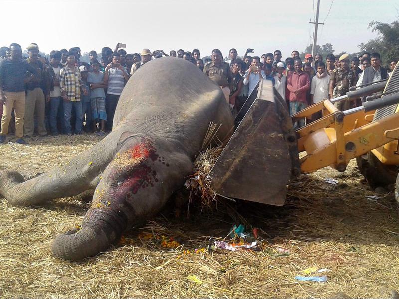 elephant death 3