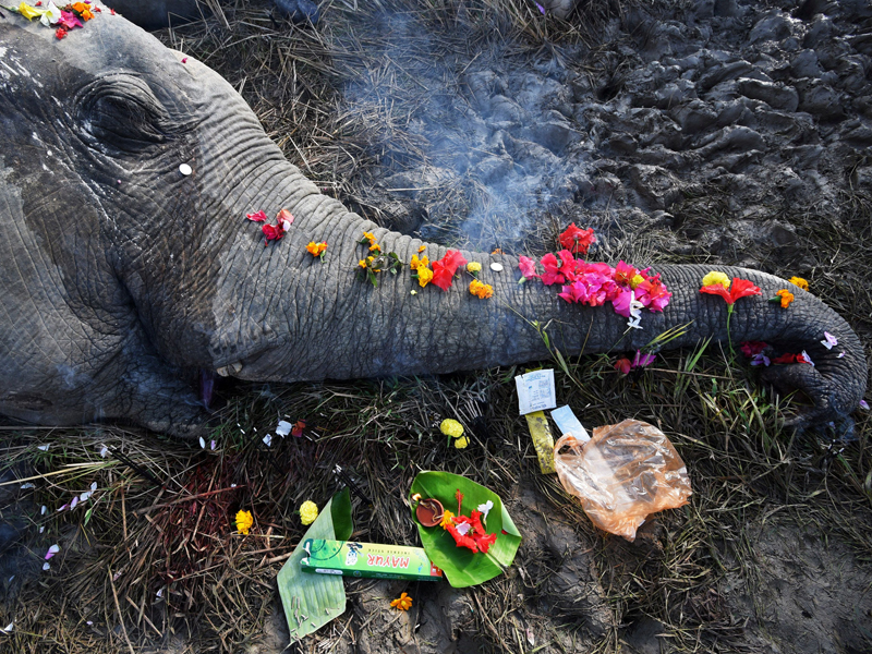 elephant death 2