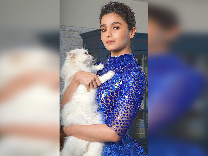 Alia Bhatt Photos Hot and Sexy HD xxx