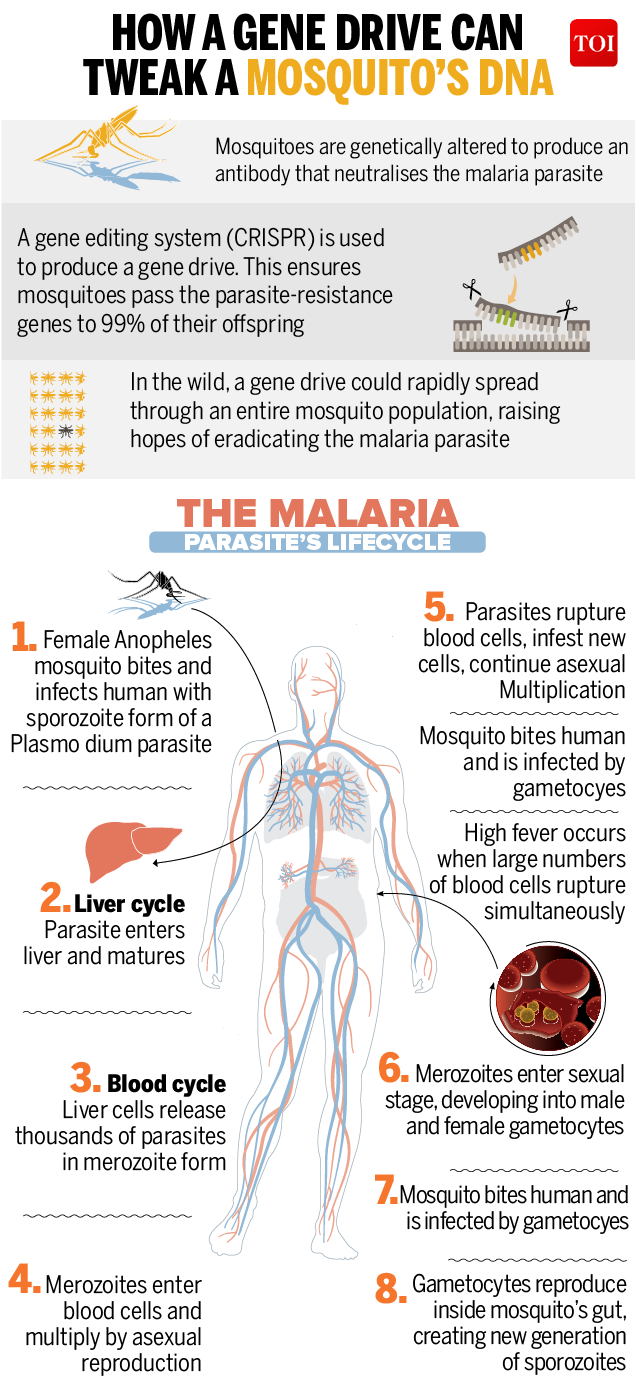 Infographic How Gene Editing Could Soon Combat Malaria