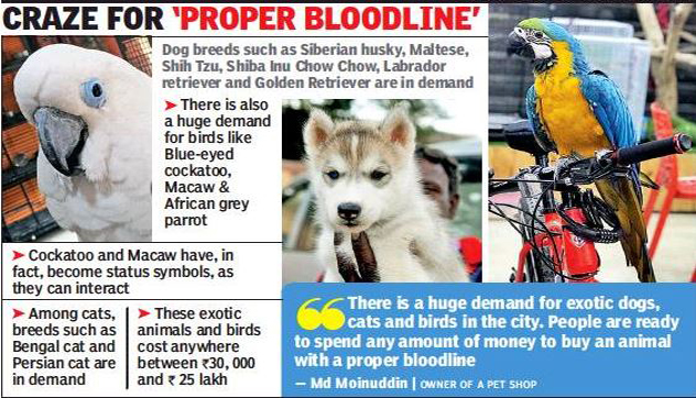 People Shell Out Lakhs To Own Exotic Animals Birds Of Fancy Feathers Hyderabad News Times Of India