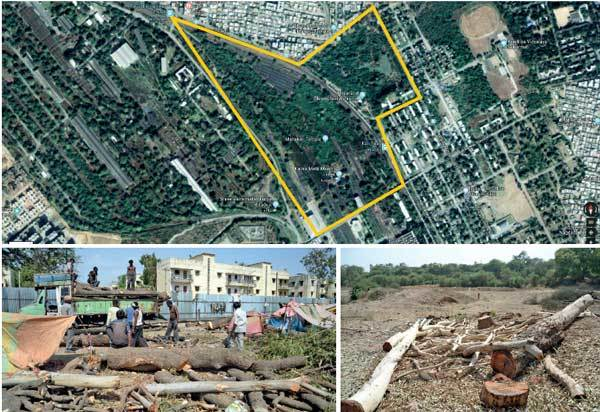 01-2(Top) The green cover that will soon be depleted; (above) the dedicated freight corridor project involves building 565 km railway track in Gujarat for which thousands of trees are being axed