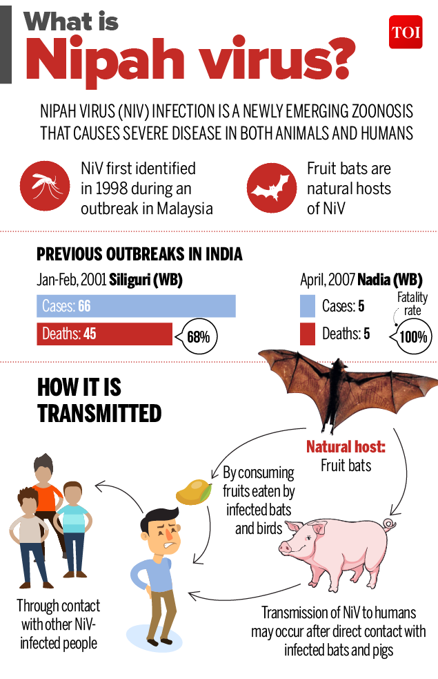 What is Nipha virus-Infographic-TOI-1