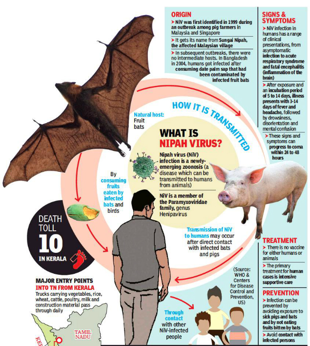 symptoms of nipah virus