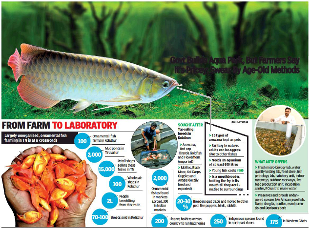 Tech Over Tradition Chennai Fish Breeders Won T Take The Bait