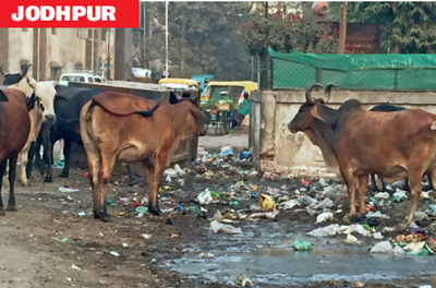 Jodhpur has several spots with overflowing public garbage bins