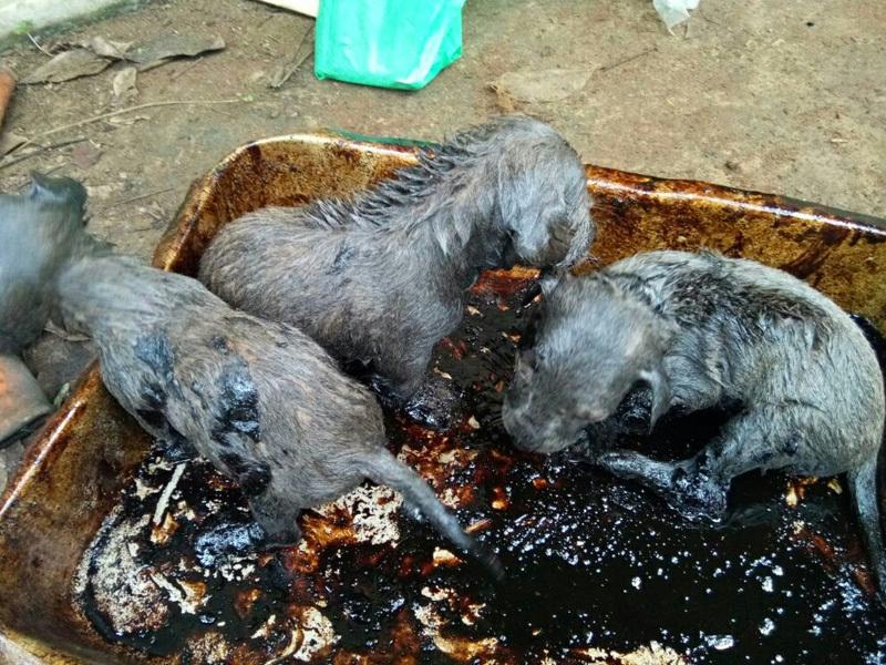 puppies-saved
