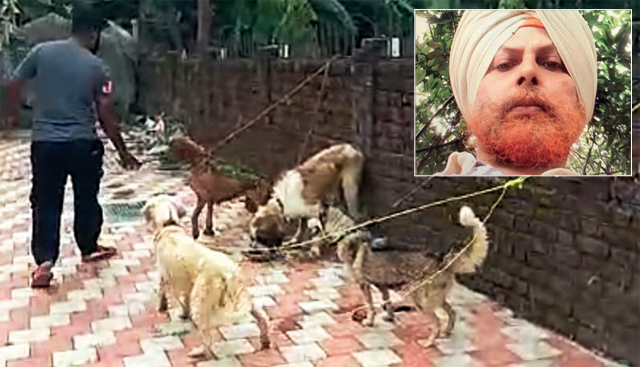 Four of the nine dogs rescued from Bedi's bungalow; (inset) Dr Virendra Pal Singh Bedi