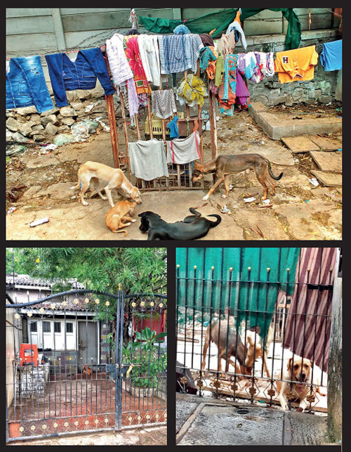 Residents (R) claim that the Bharadiyas keep dogs and cats in small spaces and beat them when they squabble. When officials come calling, the animals are simply pushed into an adjoining plot