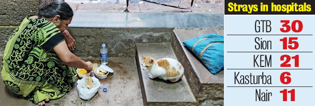 A cat settles down for a meal at KEM hospital (PHOTO BY SACHIN HARALKAR)