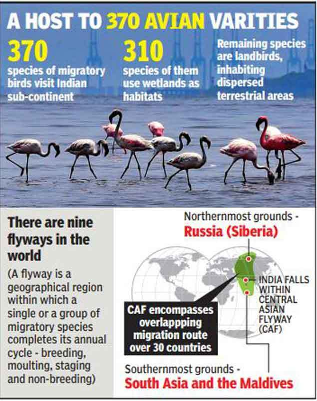 Image result for 5 year action plan to remain a paradise of migratory birds