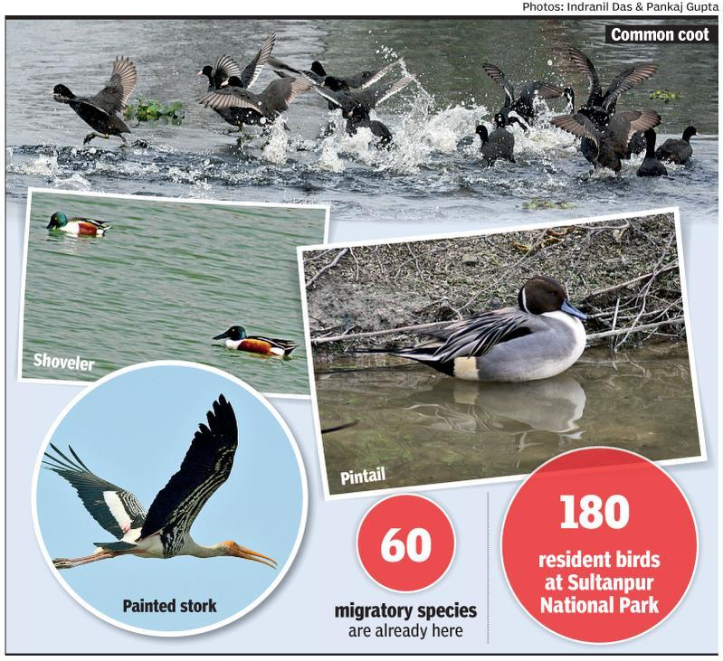 Birdwatching season off to a perfect start at Sultanpur park
