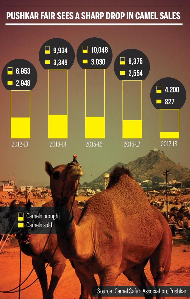 Camel sales at Pushkar declining