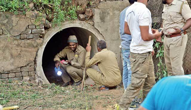 Forest staffers in the culvert from where the leopard was caught on Monday afternoon; PICS: ALOK BRAHMBHATT