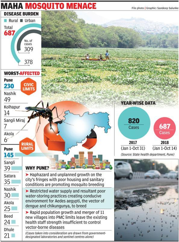 At 375 cases, chikungunya hits Pune hardest in state