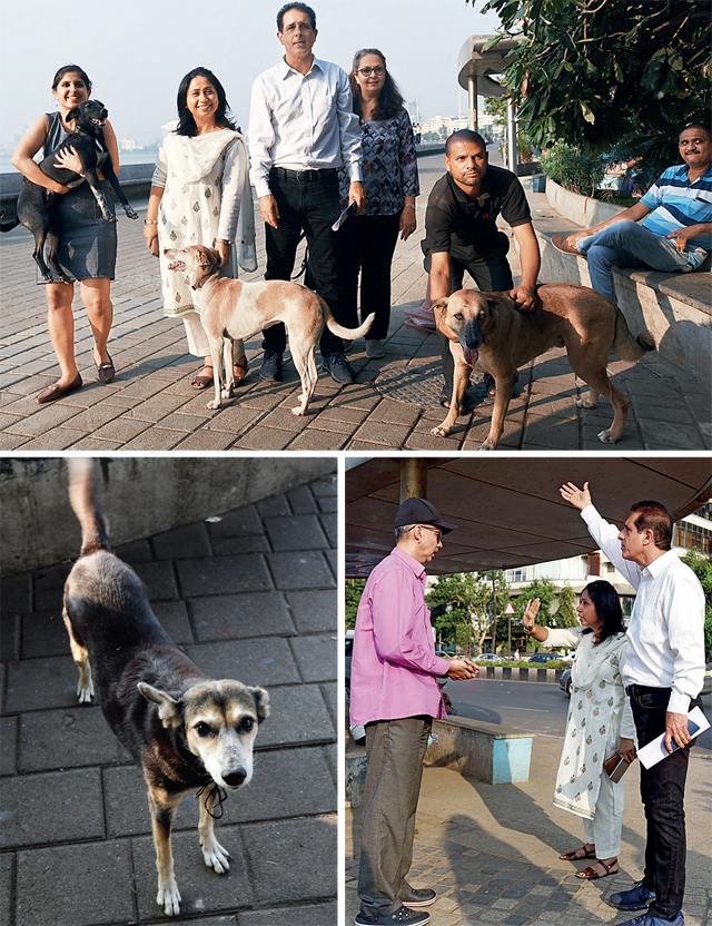 Top: (From left to right) Peppino Bahl, Indira Paul, Anil Bahl, Aparna and Vali Jha with the strays Polish, June and Tristan on Marine Drive on Tuesday; Above left: Muffin is one of the dogs that was allegedly attacked; Nitin Chavan (left) with the dog feeders Indira Paul and Anil Bahl