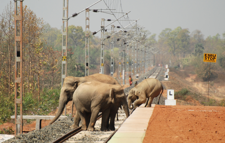 Biplab Hazra_Elephant_Bishnupur_DSC_3402