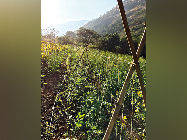 Shashwat, the 900-acre forest farm in Maval Taluka developed by Gadgil, which features 289 species of native plants and trees