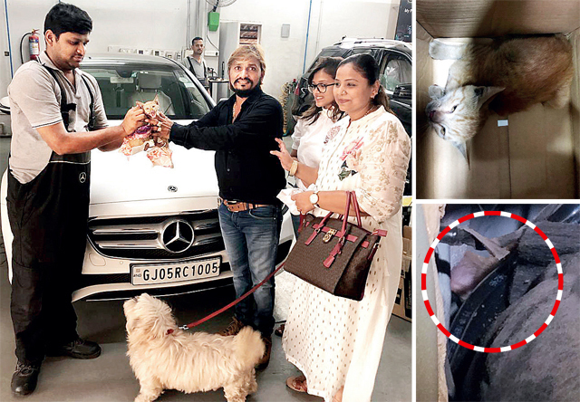 Jayesh Tailor (right), his wife and daughter. The kitten had climbed into a small space in the engine bay of their Merc. Above: The stuck kitten