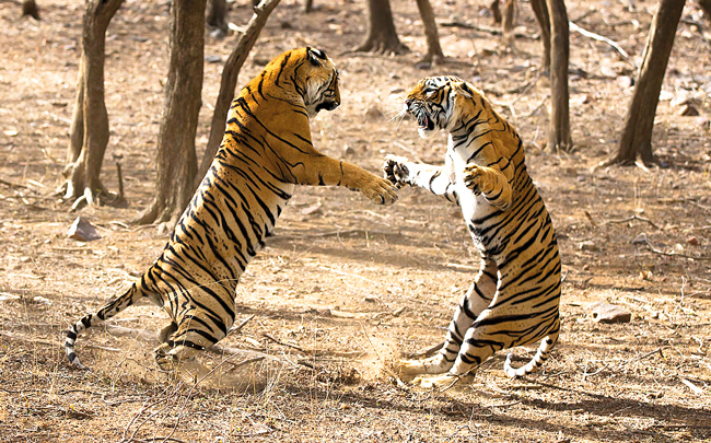 S Nallamuthu's film 'The Clash of Tigers' will open the fes