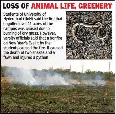 snake fire