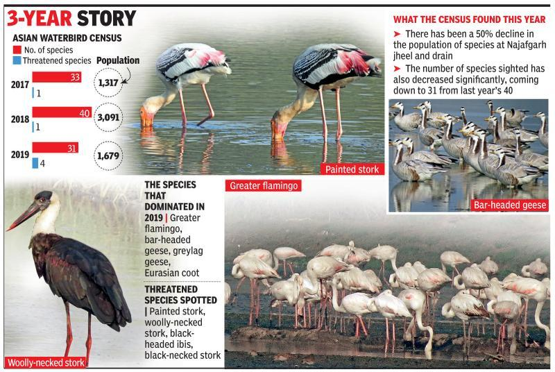 Climate change? 50% dip in winged visitors at Najafgarh