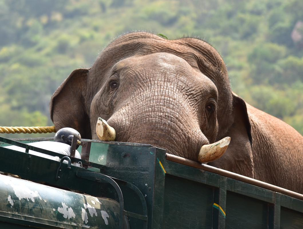 Image result for chinnathambi elephant