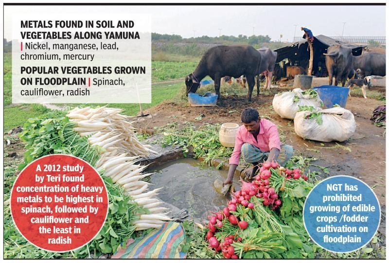 Why veggies grown near Yamuna are bad for you