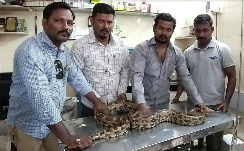 python4_ED