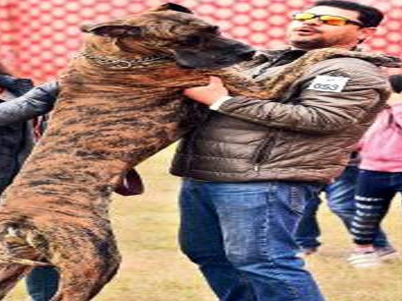 DOG BREED1