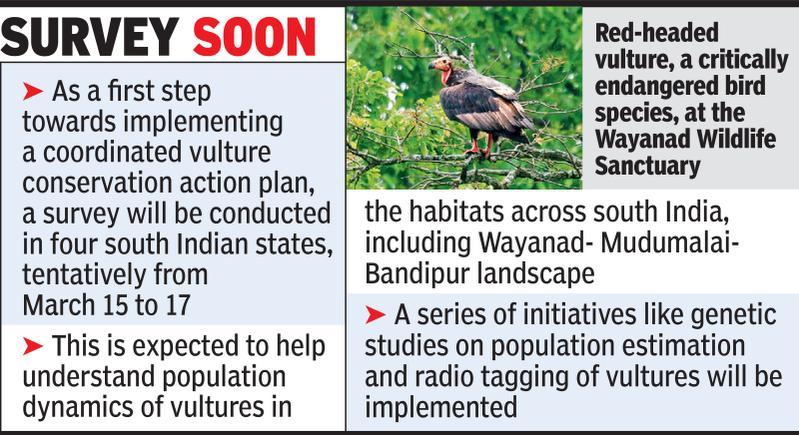 Vulture safe zone across south Indian states mooted