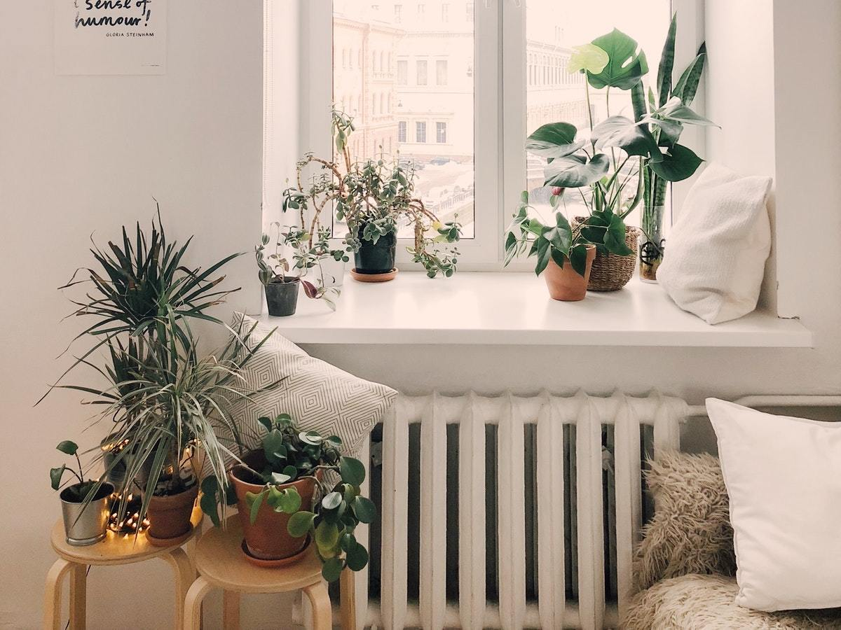 Fill your space with plants