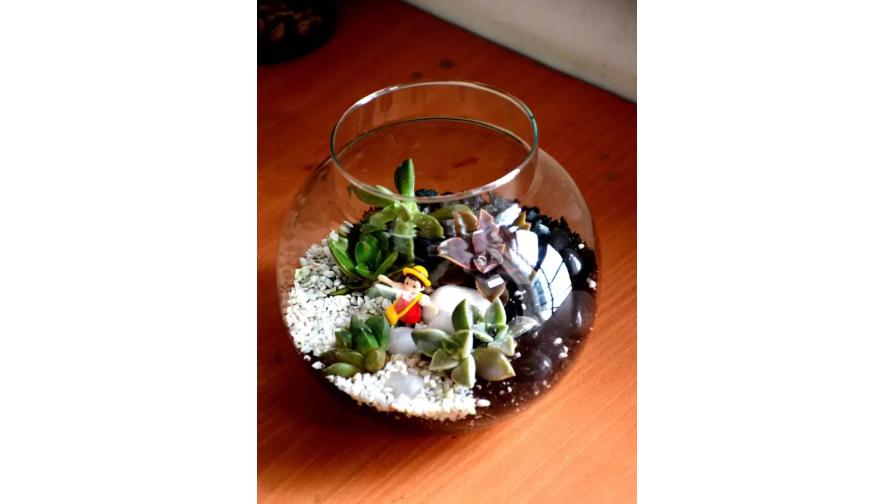 Round Succulent Terrarium Plant