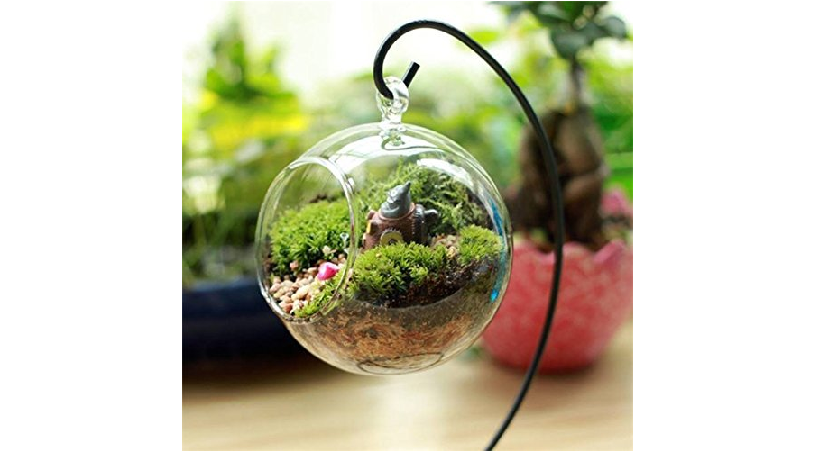 Terrarium Plants Mini Gardens That Suit Every Room And Living Space
