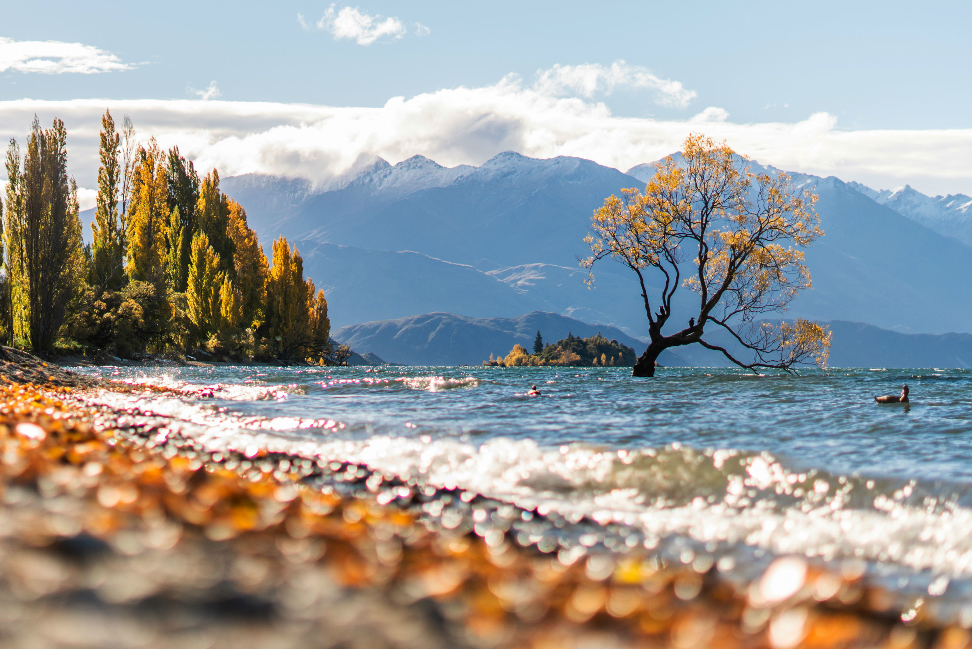 The lone tree of Wanaka Lake—in pursuit of the perfect picture | Times of  India Travel