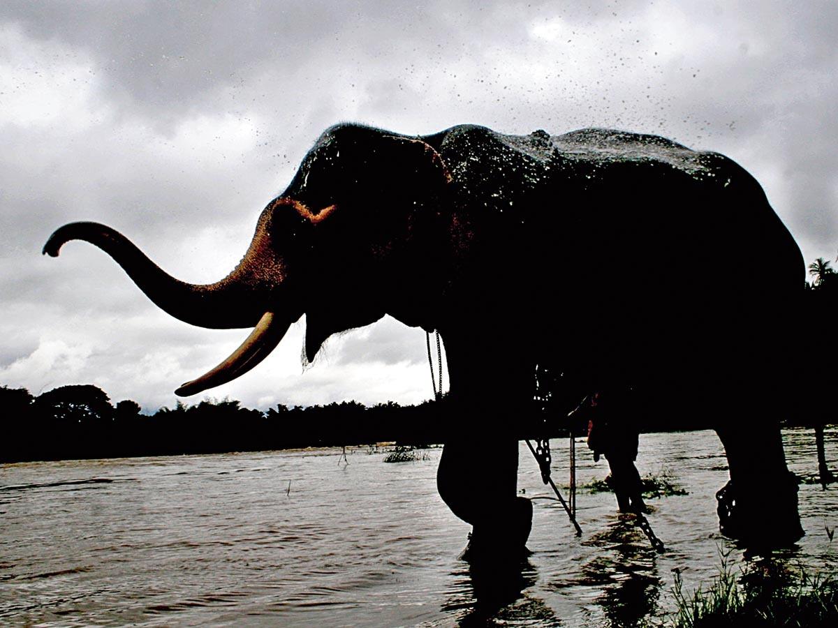 Kerala-Elephantduringrain