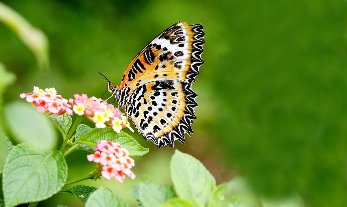 stoi-butterfly10-4col