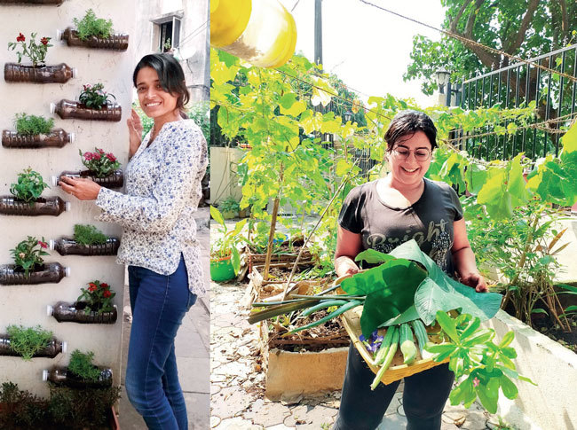 Smita Shirodkar poses with her open wall garden at her office in Dadar. Pet bottles have been used to grow flowering plants that do not require much root space.(PIC:SMITA SHIRODKAR) ; Diipti Jhangiani with the produce from her garden; PIC: DIIPTI JHANGIANI