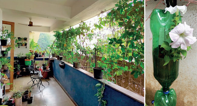 Jhangiani's balcony in Bandra receives only 3-4 hours of sunlight. The pots are stacked in this manner so that they can make most of the light. (right) A soda bottle used to grow a flowering plant