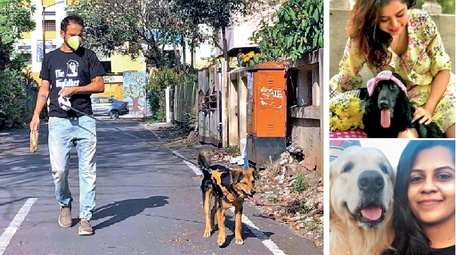 Les parents d'animaux de compagnie dans des régions comme Kapil, Priyanka et Aishwarya (dans le sens des aiguilles d'une montre à partir de la gauche) ont déclaré que leurs chiens Kaiser, Bella et Max, respectivement, font partie des nombreux chiens malheureux qui auront besoin de se recycler et devront faire face à un stress `` cruel '' pour ne pas être autorisé à une simple promenade, suivre toutes les règles