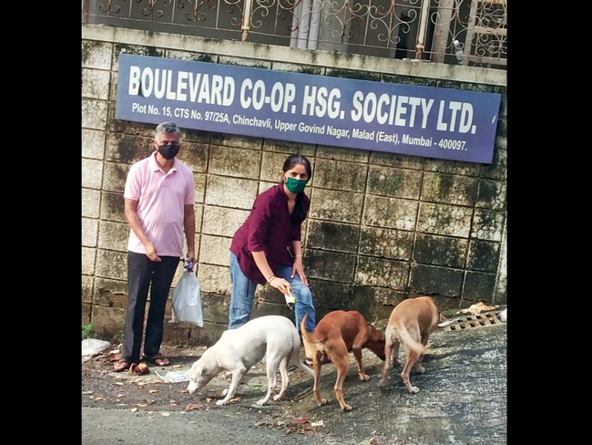 Animal rights activist Madhu Chanda says neighbours assaulted her husband to get them to stop feeding strays
